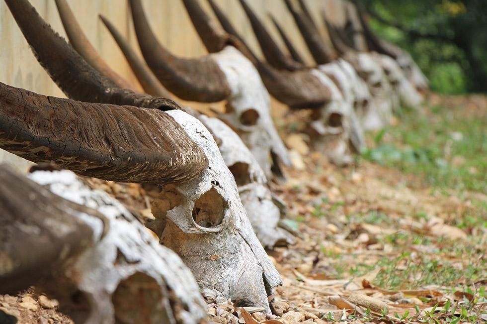 Baan Dam exhibits many dead things