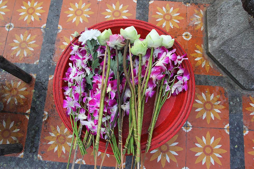 Lotus flowers at Doi Suthep