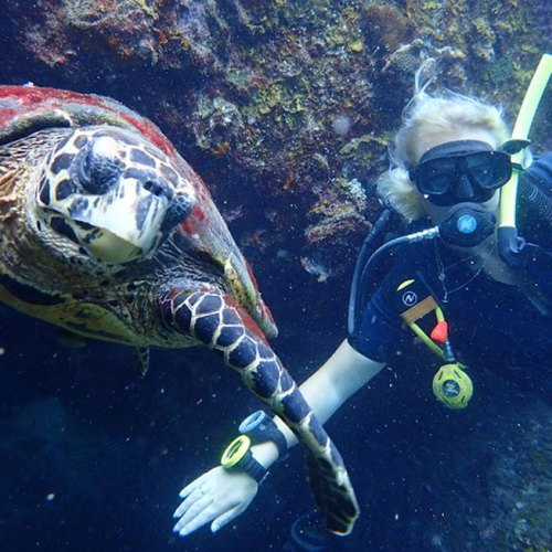 Swimming with a sea turtle - Learn to Dive Koh Tao