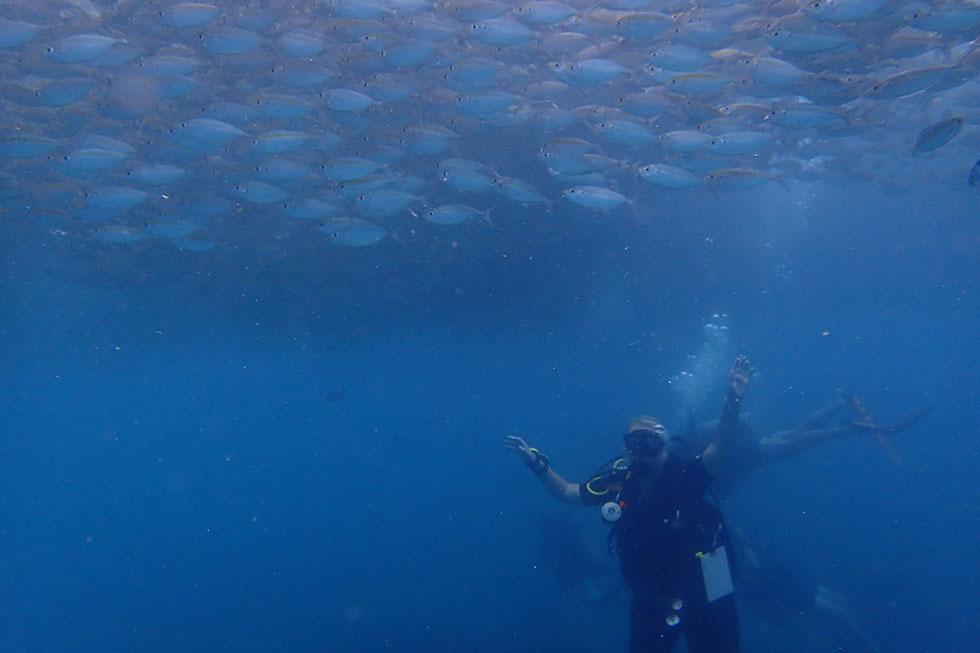 School of fish - Koh Tao diving