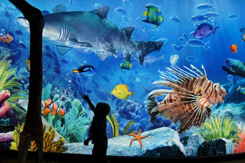 Safari World, Dream World and Sea Life Ocean World Combo Tickets