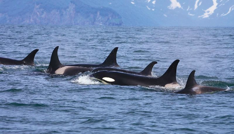 Seattle to San Juan Island Ferry - Roundtrip with Whale Watching