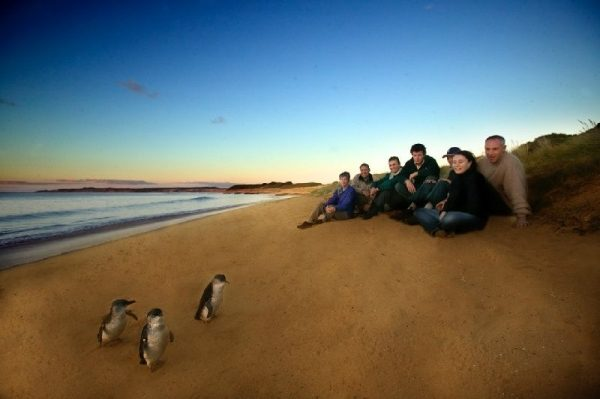 Phillip Island Penguin Parade and Wildlife Adventure Tour