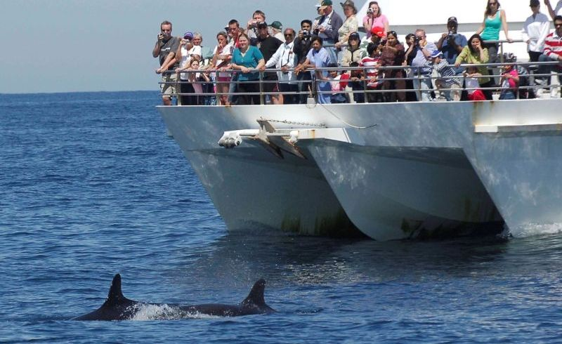 Port Stephens Dolphin Watching