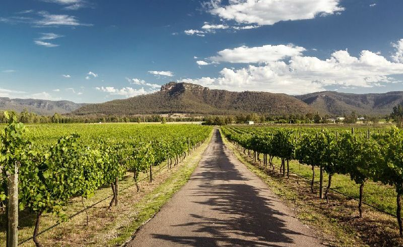 Hunter Valley Wine and Wildlife Tour from Sydney