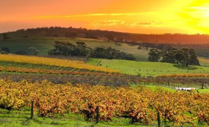 Hahndorf and Barossa Wine Experience