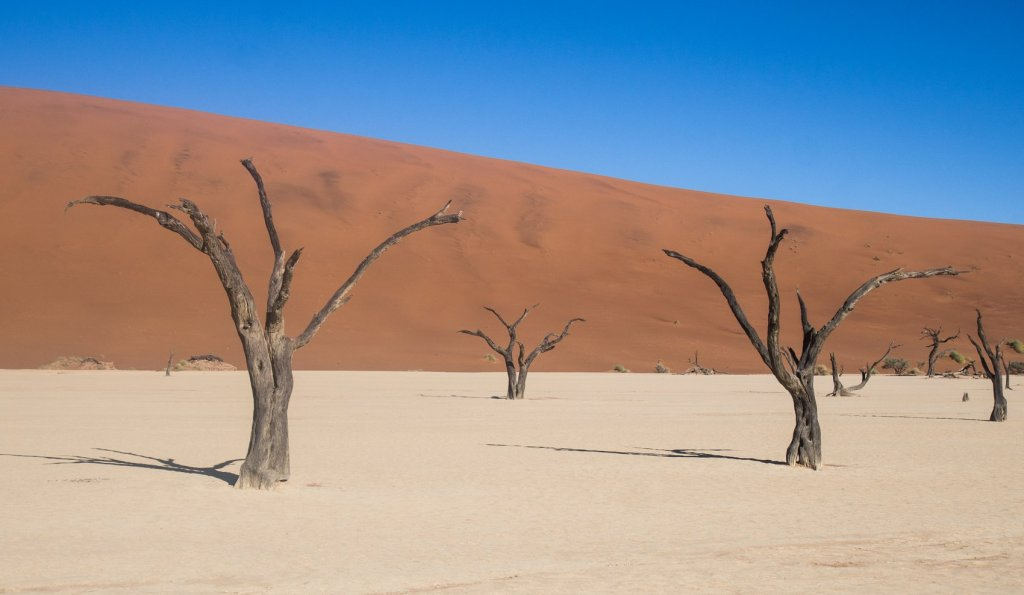 White clay ground of Deadvlei, in Sossusvlei area of Namibia