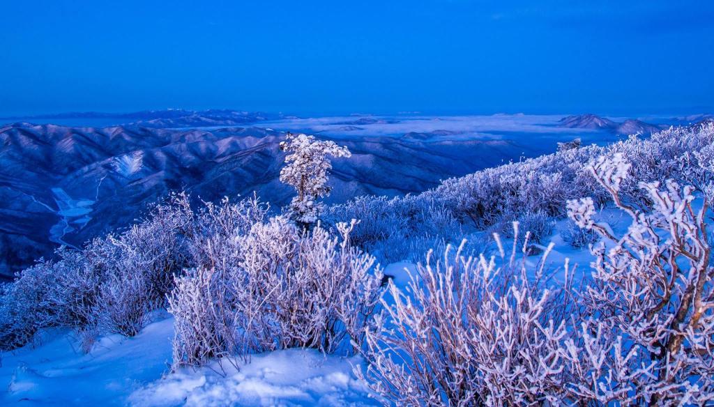 Snow flowers near the summit of Taebaeksan in Taebaeksan National Park.