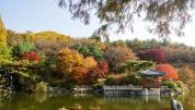 Fall Colors in Daejeon
