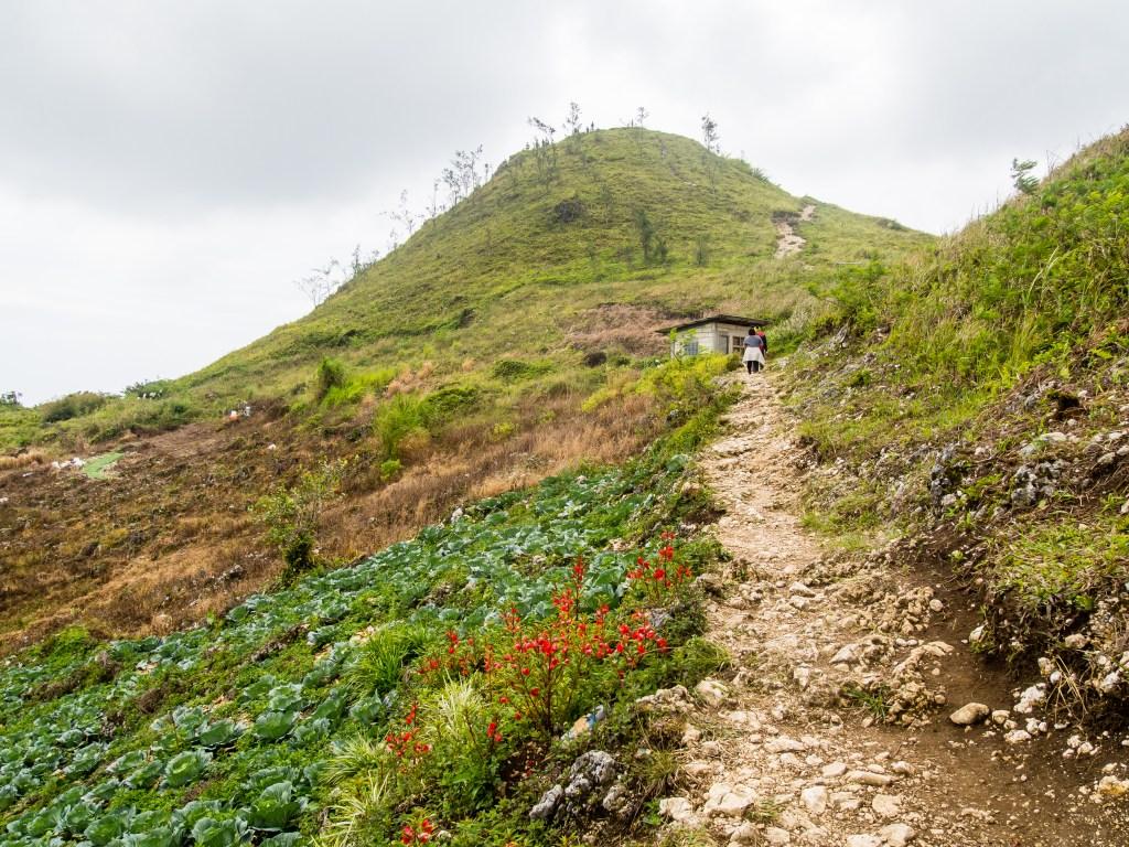 Pathway Up Osmena Peak