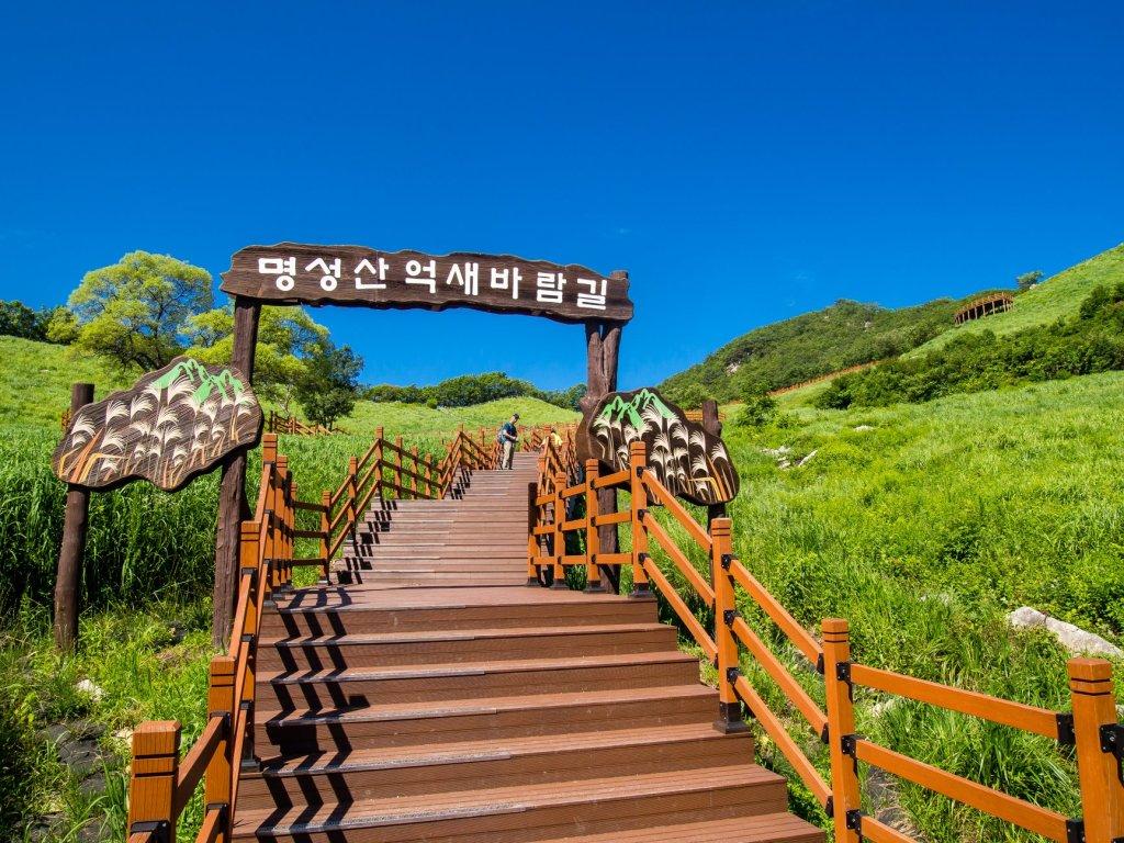 Myeongseongsan Silver Grass in the Summer