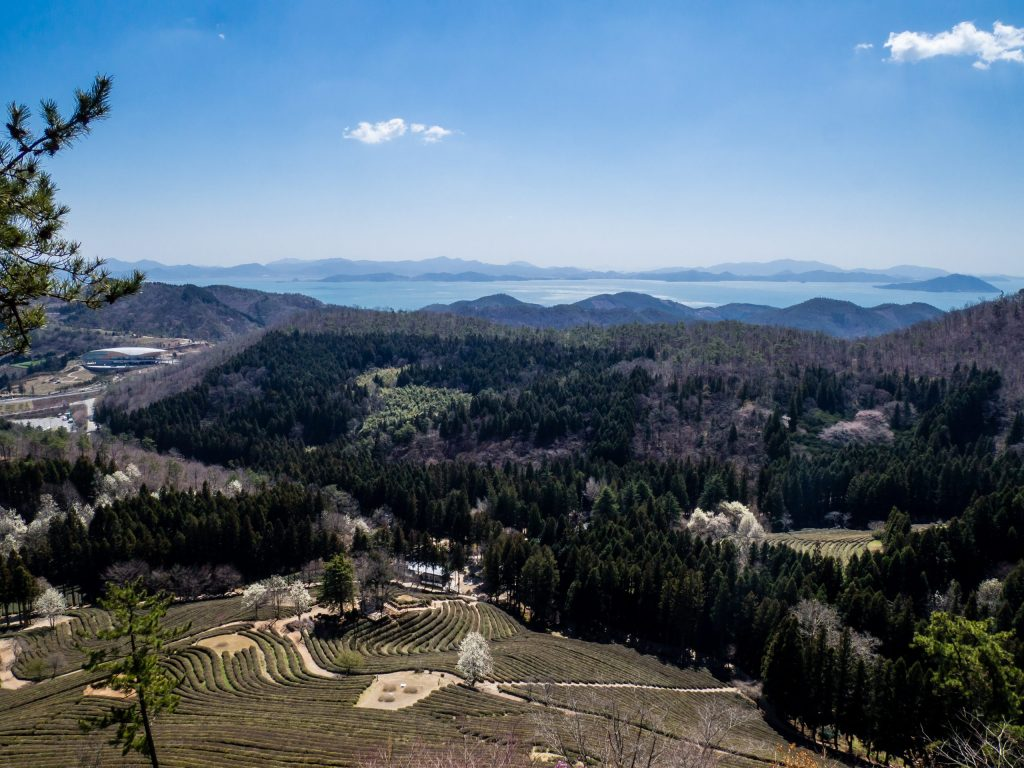 Ocean view from upper observation deck at Daehan Dawon Green Tea Fields, Boseong