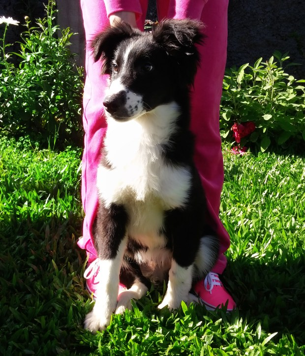 ozzy-cachorro-border-collie-meu-look-sininhu-sylvia-santini-blog-got-sin-01