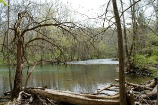 woods river