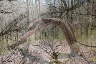 curved stump