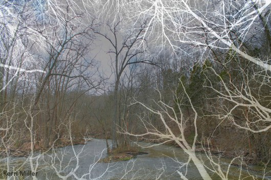 inverted tree river