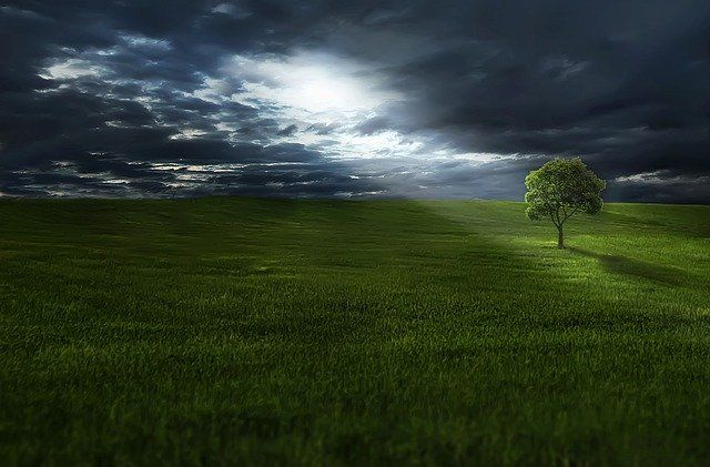 Landscape with tree in sunlight