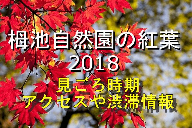 栂池自然公園の紅葉2018見ごろとアクセス情報