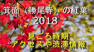 箕面(勝尾寺)の紅葉2018見ごろ時期やアクセス情報・ライトアップも