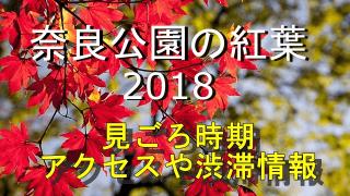 奈良公園の紅葉2018の見ごろとアクセス情報