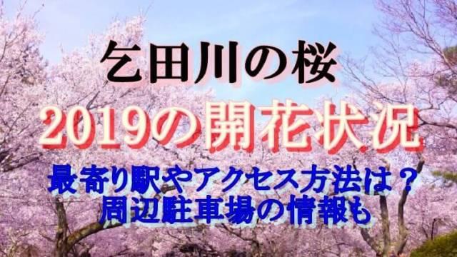 乞田川の開花状況2019