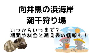 三重県の向井黒の浜海岸の潮干狩り基本情報や期間と料金・潮見表についてご紹介しています