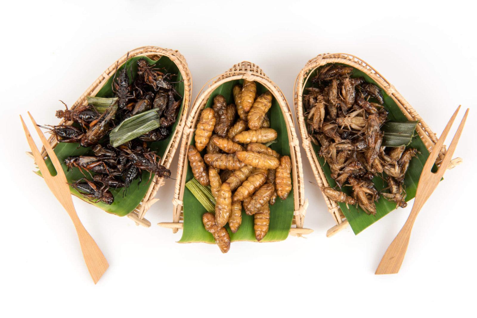 Muy nutritivos, pero los insectos comestibles en México están al ...