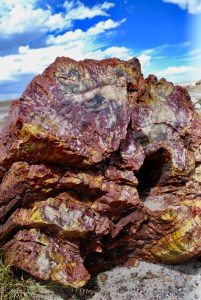 Petrified forest - tree trunk