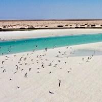 Barr Al Hikman - the wetlands of Al Wusta, Oman ****