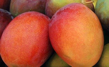 types of Mexican mango kent