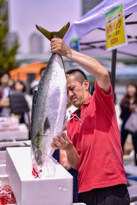数の子の試食4,000人分!ざこばの朝市×世界の数の子博を 大阪市中央卸売市場前で11/25に開催 マグロ解体ショーなども