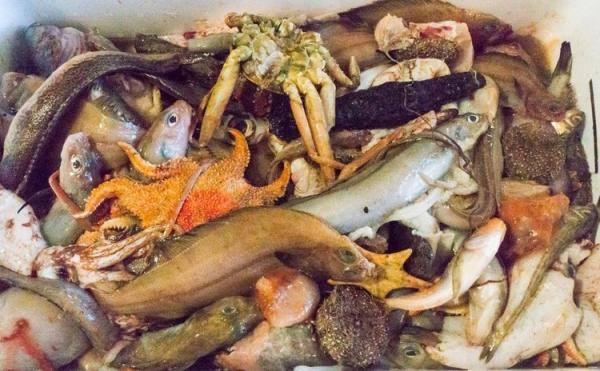 深海ギョッチ ~底曳網の出荷されなかった魚を眺めて食べる会~ 開催決定!