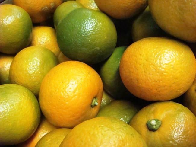 橙オレンジは生食には向かないビターオレンジ。火を入れると香りも風味も一気に華やかになるオレンジで、マーマレードに使われています