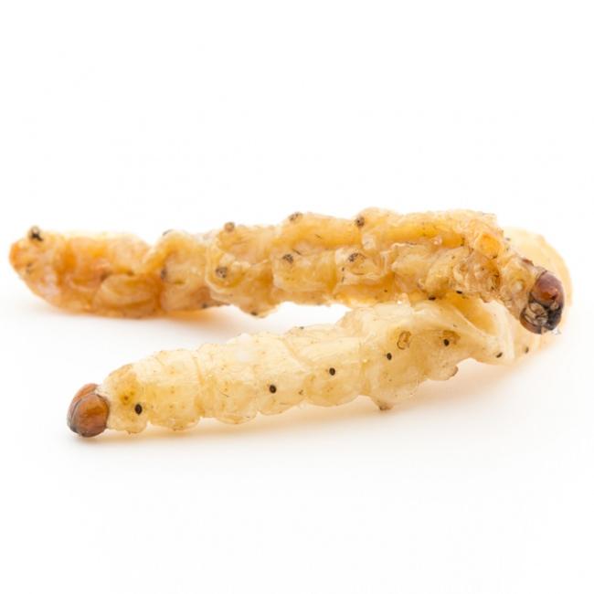 竹虫とも呼ばれるバンブーワーム