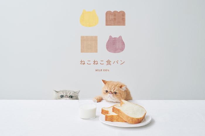 【和歌山県に初オープン】ねこの形の高級食パン専門店「ねこねこ食パン」がイオンモール和歌山に登場!
