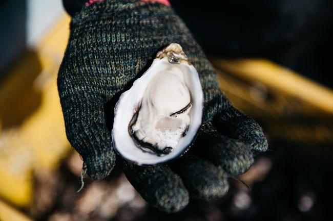 中津の漁師が丁寧に育てた牡蠣