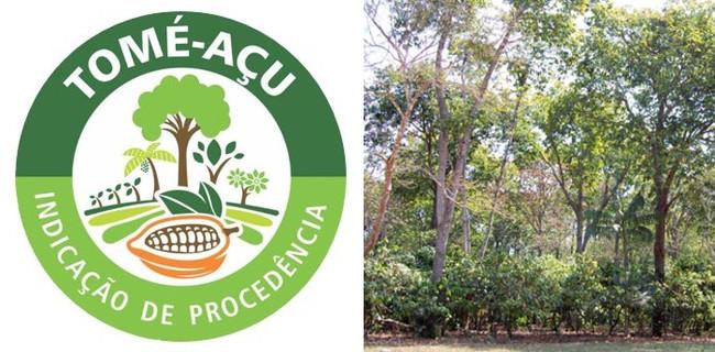 森をつくる農業「アグロフォレストリー」栽培による 産地認証取得カカオ豆の取り扱い開始について