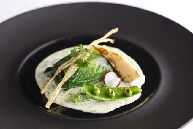 露メインレタスで包み蒸しあげた小鯛 あおさ海苔のクリームソース
