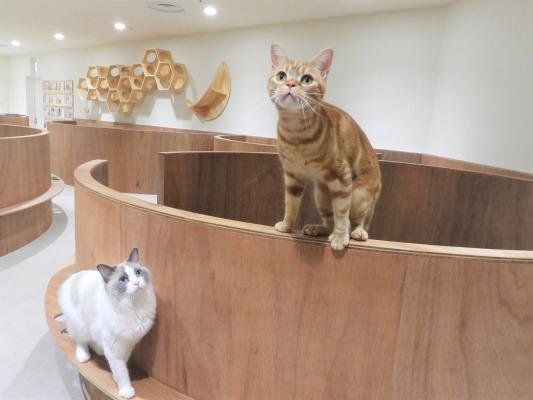 中国地方初出店!岡山県倉敷市に猫カフェ『Moff animal cafeアリオ倉敷店』OPEN!