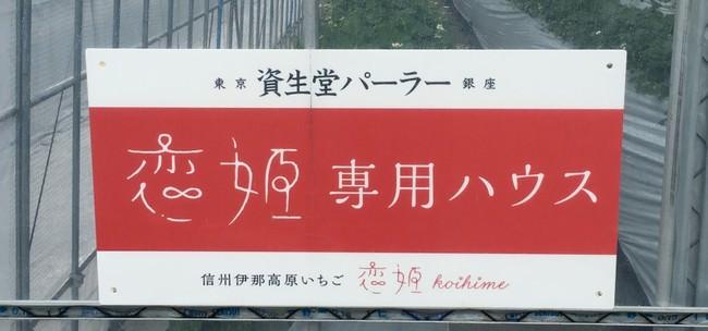 """長野県 信州畑工房 """"恋姫"""" 資生堂パーラー専用ハウス"""