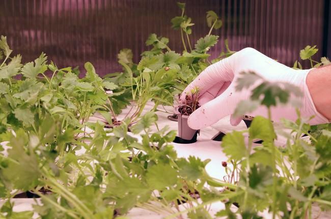 店内での苗植え作業の様子