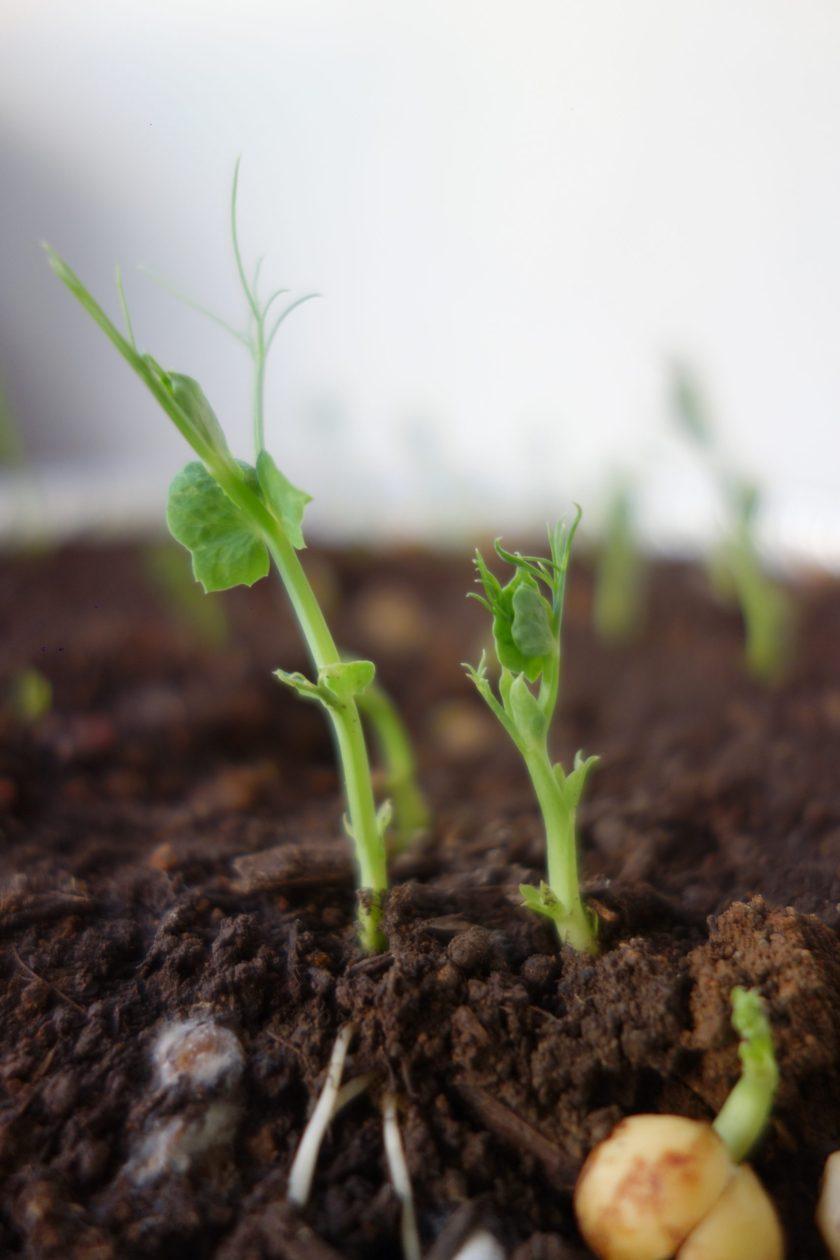 atelier germination