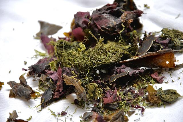 algues Alimentation vivante