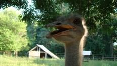 zoo0009