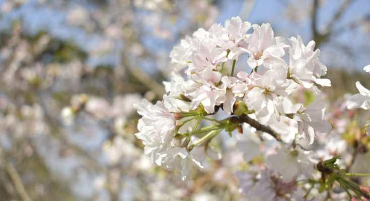 Primavera chega com temperaturas altas e chuvas irregulares, prevê Climatempo