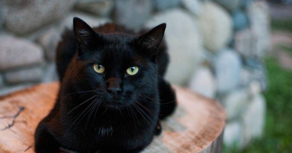 Črna mačka presenetila igralce ameriškega nogometa: Med tekmo se je sprehodila po igrišču