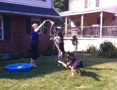 Hot Dogs! How to Keep Dogs Busy When It's Too Hot to Walk