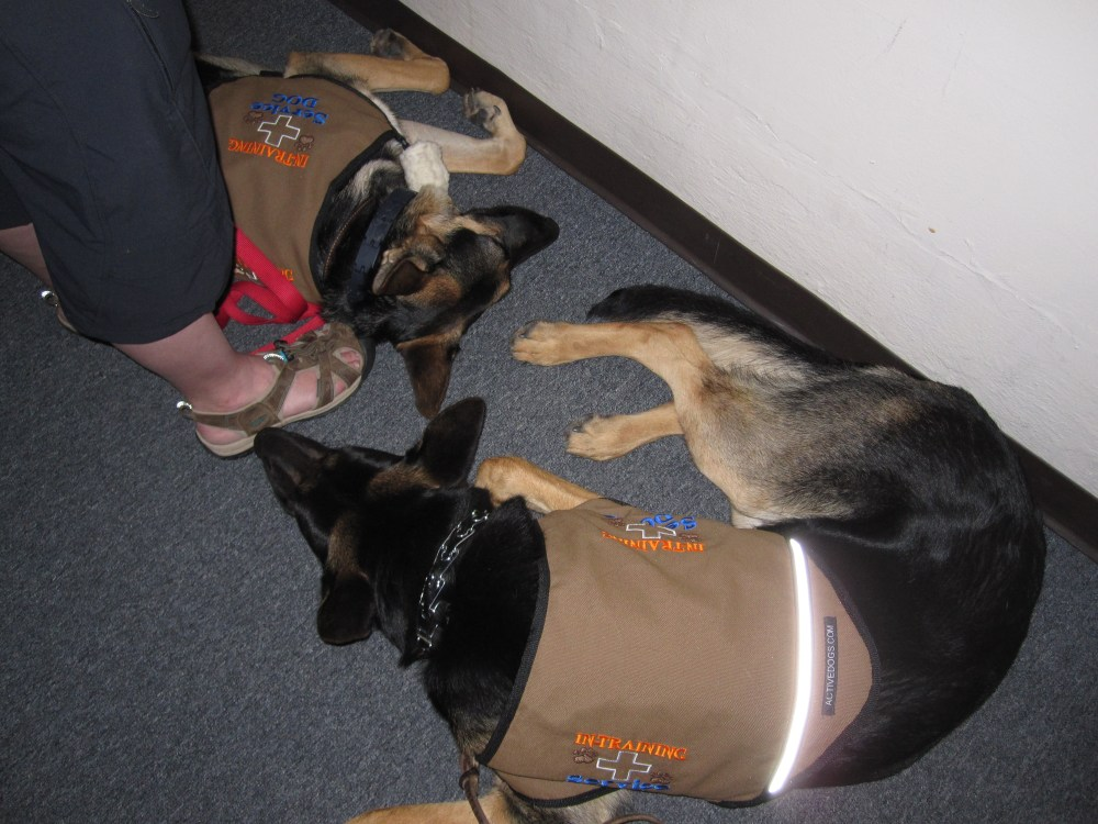 Self-Trained Service Dogs