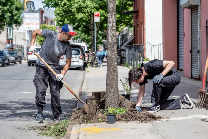 Street Tree Stewardship in Gowanus, Brooklyn