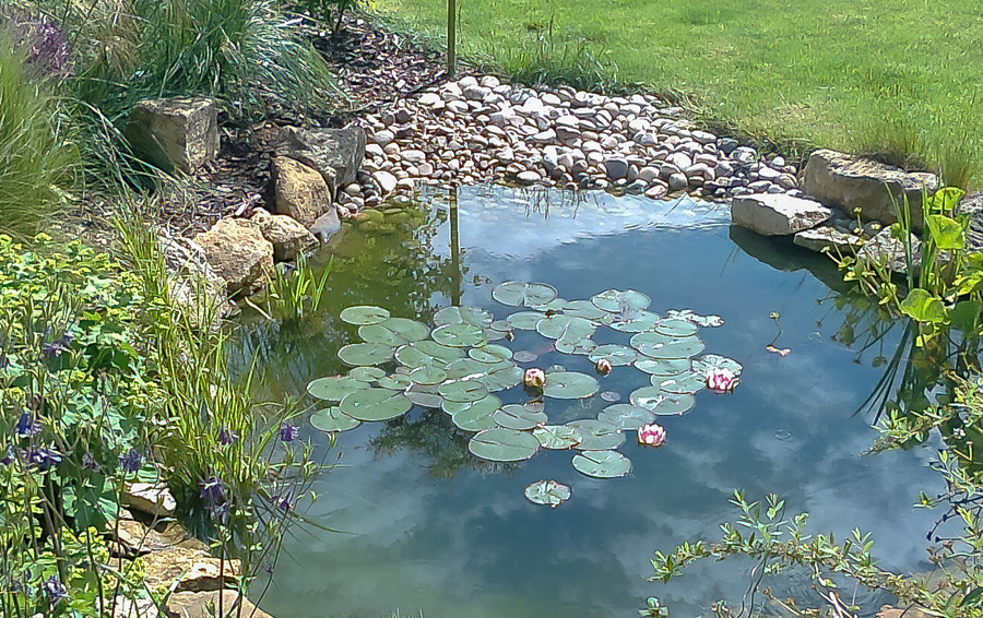How Build Your Own Pond
